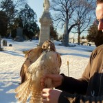 Bobby Horvath with red-tailed hawk
