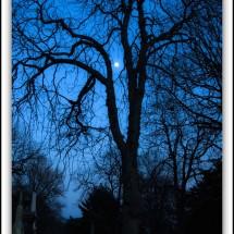 moon-photo