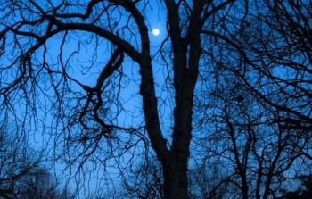 moon-photo-home
