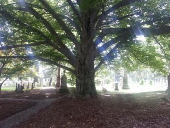 tree-id-walk