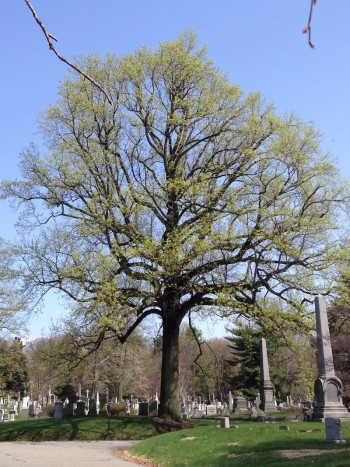 tree-id-green-wood-historic-fund