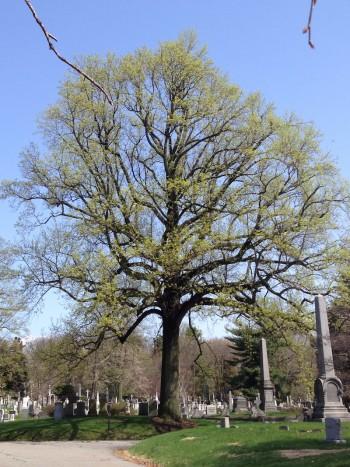 tree-id-green-wood-historic-fund
