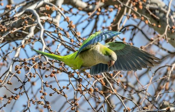 birding-in-peace