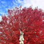 ruby-red-maple-with-angel-credit-rick-ho