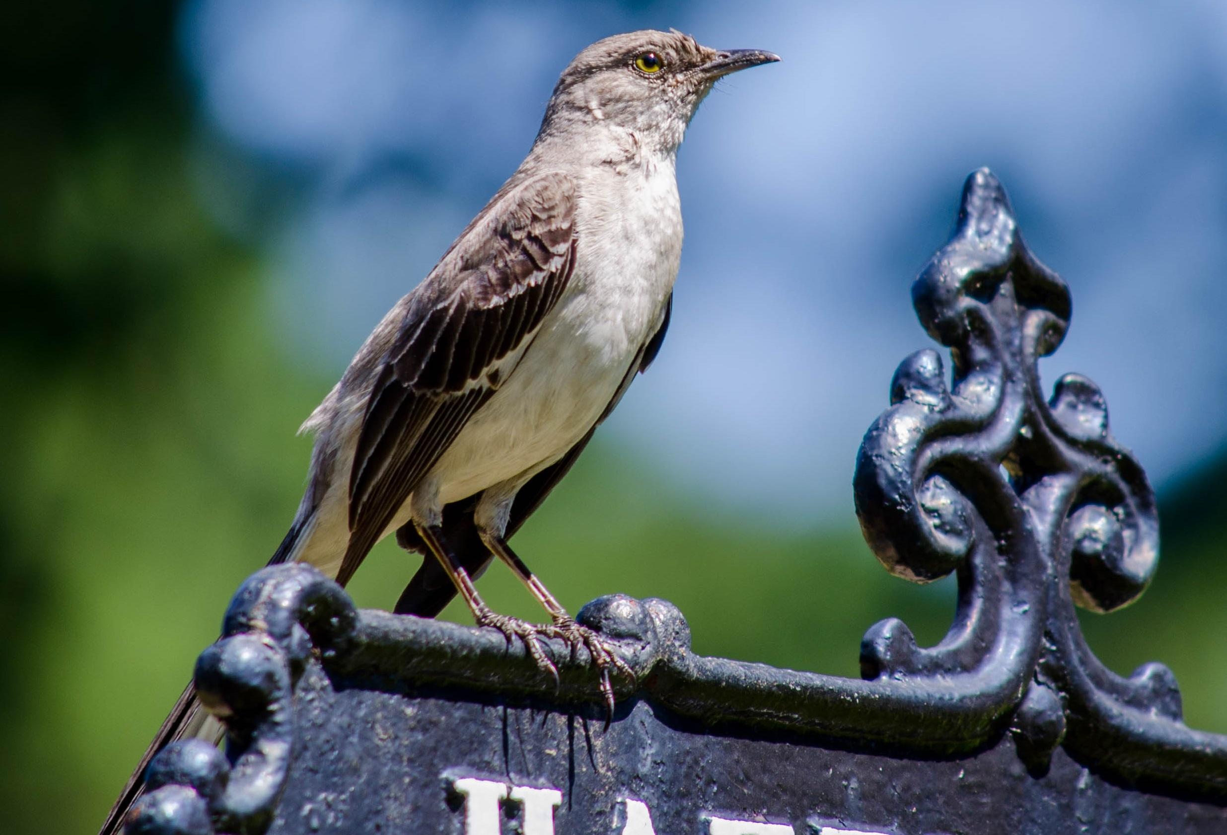 Birding In Peacegreen Wood