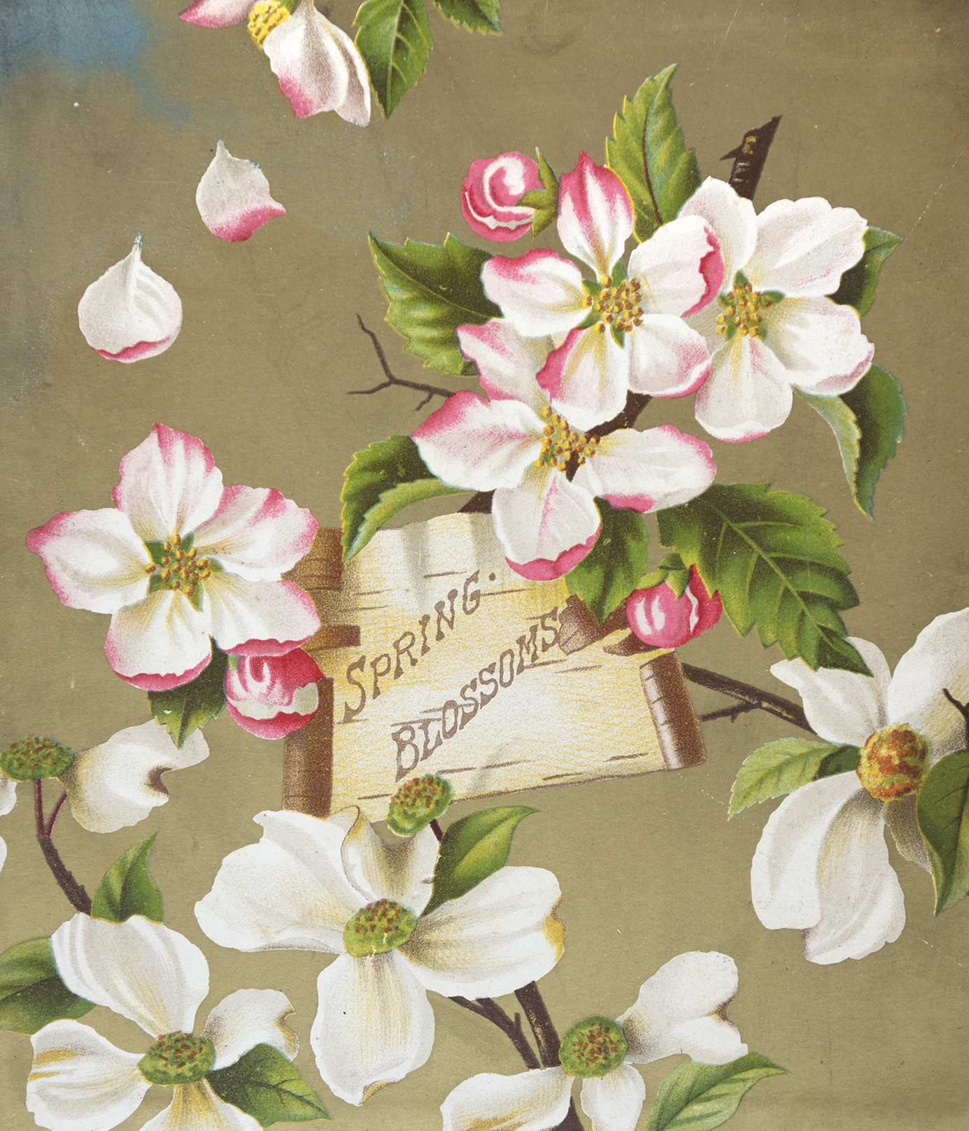 blossoming  a spring equinox celebrationgreen
