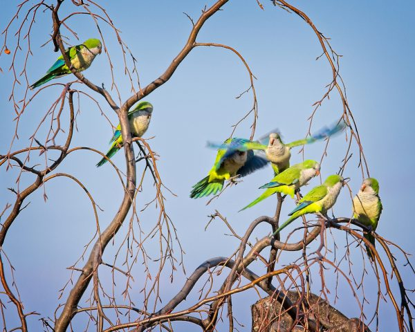 parakeets branches perch