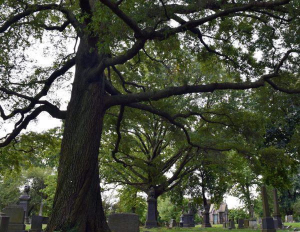 green-wood trees