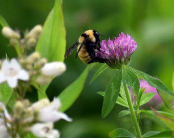 green-wood bee flower