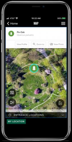 app tree map zoom