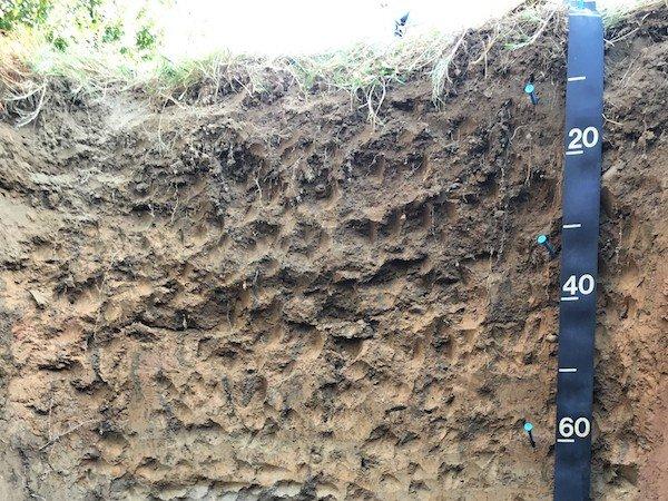 soil dig