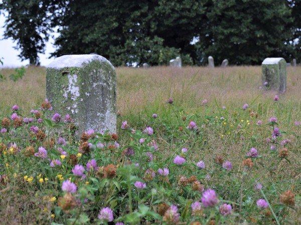 green-wood meadow