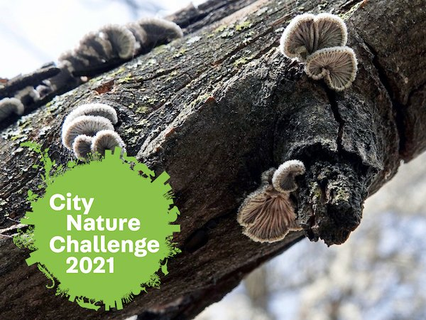 city nature challenge fungi