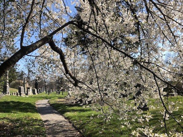 spring tree path