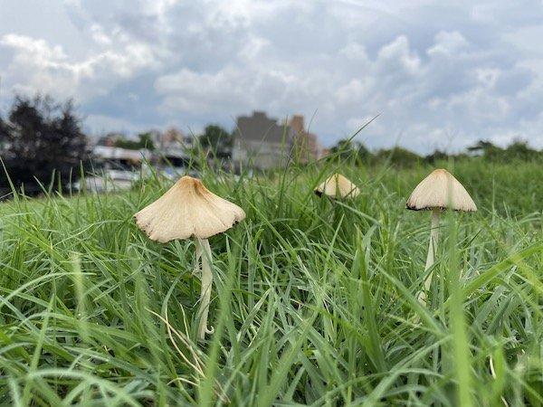 green-wood mushrooms